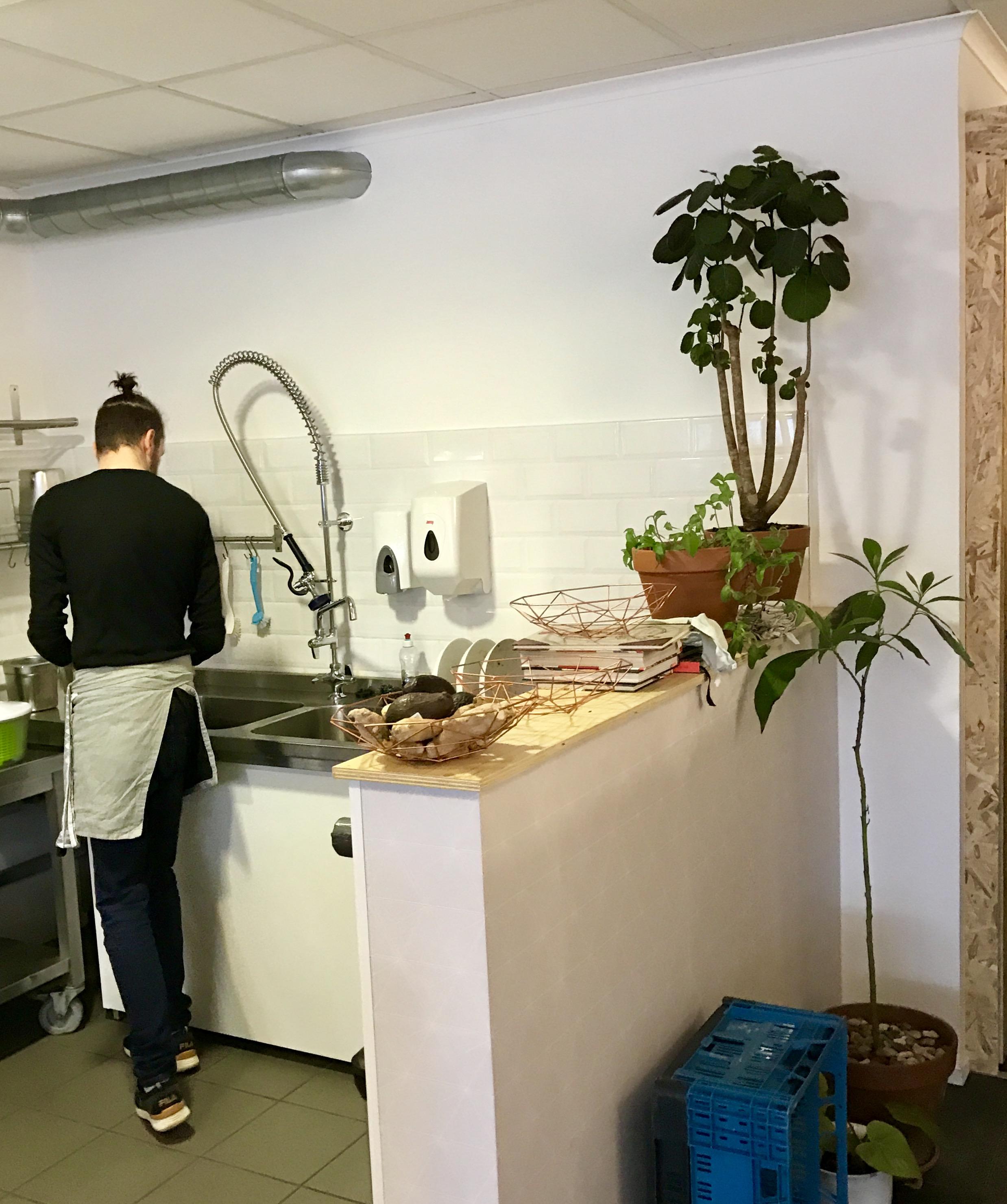 avocadoplantje en keuken